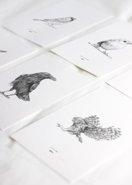 Birds set of 8